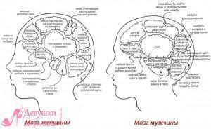 женский и мужской мозг