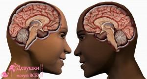 мужской и женский мозг