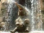 shast-slon